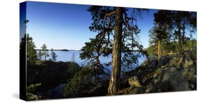 Trees at the Lakeside, Saimaa, Puumala, Southern Savonia, Eastern Finland, Finland--Stretched Canvas Print