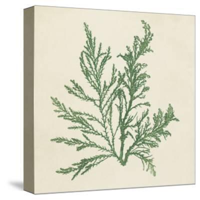 Chromatic Seaweed I-Vision Studio-Stretched Canvas Print