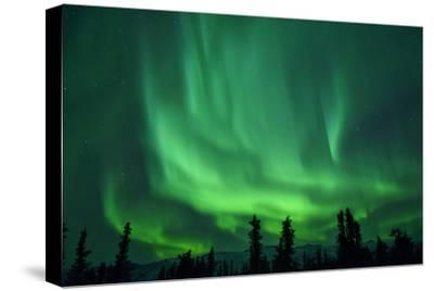 Aurora Borealis at Chena Hot Springs, Fairbanks, Alaska, Usa-Christian Heeb-Stretched Canvas Print