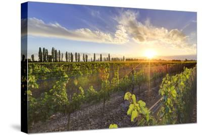 Argentina, Mendoza, Lujan De Cuyo, Malbec Grape Wineries-Michele Falzone-Stretched Canvas Print