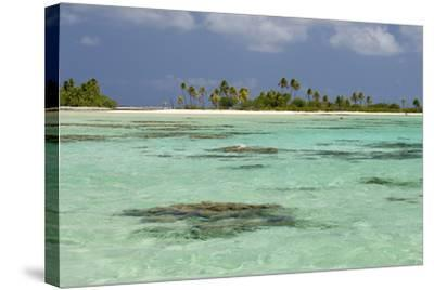 Palm Trees Along a Tropical Beach, and Coral Heads Visible Through Crystal Clear, Blue Water-Sergio Pitamitz-Stretched Canvas Print