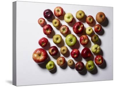 Heirloom Varieties of Apples-Rebecca Hale-Stretched Canvas Print