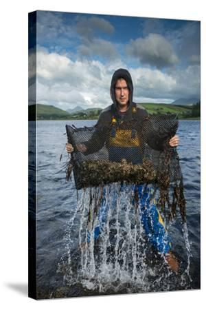 An Oyster Farmer Pulls a Bag of Pacific Oysters Out of the Cold Waters-Jim Richardson-Stretched Canvas Print