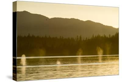 Geysers of Spray from Six Humpback Whales Exhaling in the Inside Passage-Jonathan Kingston-Stretched Canvas Print
