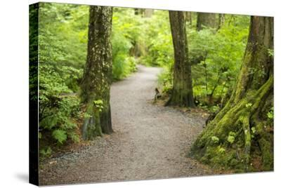 A Graveled Path Through the Woods of the Temperate Rainforest in Sitka, Alaska-Jonathan Kingston-Stretched Canvas Print