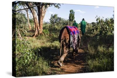 An Orphaned African Elephant with a Sleeping Blanket Follows a Carer Through the Forest-Jason Edwards-Stretched Canvas Print
