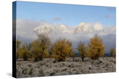 Clouds Clear from the Tetons after a Fall Storm-Barrett Hedges-Stretched Canvas Print
