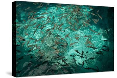 Fish Clustered around a Pier in the Ocean-Karen Kasmauski-Stretched Canvas Print