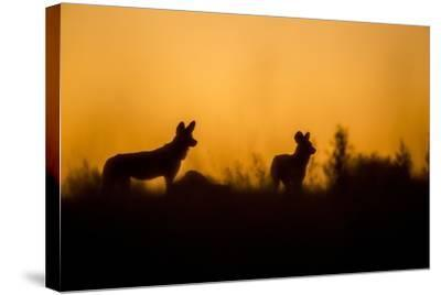 Wild Dogs, Moremi Game Reserve, Botswana-Paul Souders-Stretched Canvas Print