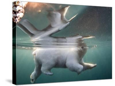 Underwater Polar Bear, Hudson Bay, Nunavut, Canada-Paul Souders-Stretched Canvas Print