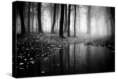 Woods-PhotoINC-Stretched Canvas Print