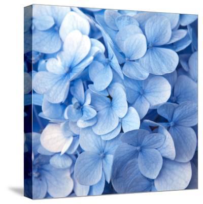 Blue Flowers--Stretched Canvas Print
