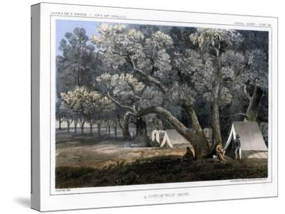 A Cotton Wood Grove, 1856-John Mix Stanley-Stretched Canvas Print