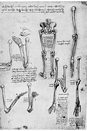 Study of Human Bones, Late 15th or 16th Century-Leonardo da Vinci-Stretched Canvas Print