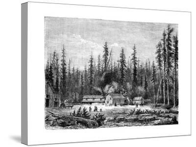 Giant Sequoia Forest, California, 19th Century-Paul Huet-Stretched Canvas Print