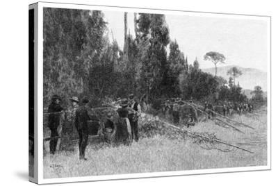 Hop Picking Near Bairnsdale, Australia, 1886--Stretched Canvas Print