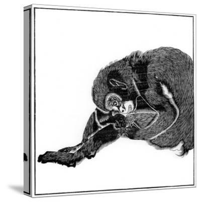 Monkey, 1766--Stretched Canvas Print