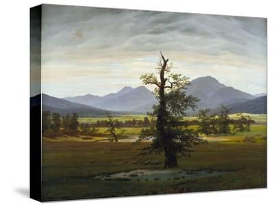 Solitary Tree (Village Landscape in Morning Light), 1822-Caspar David Friedrich-Stretched Canvas Print