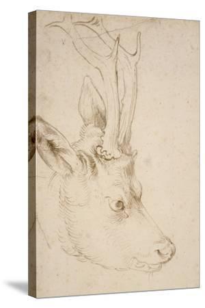 Head of a Roebuck, 1503-Albrecht D?rer-Stretched Canvas Print