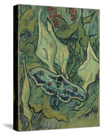 Green Peacock Moth (The Emperor Mot), 1889-Vincent van Gogh-Stretched Canvas Print