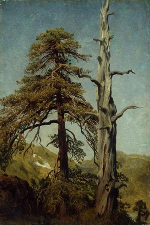 Study of Trees-August Cappelen-Stretched Canvas Print