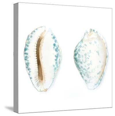 Watercolor Shells VI-Megan Meagher-Stretched Canvas Print