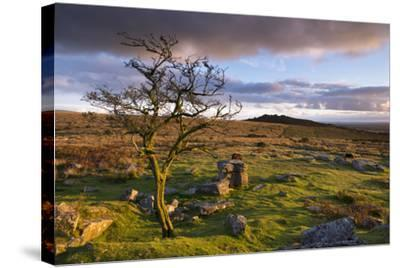 Looking to Pew Tor from Feather Tor, Dartmoor, Devon, England. Autumn (September)-Adam Burton-Stretched Canvas Print