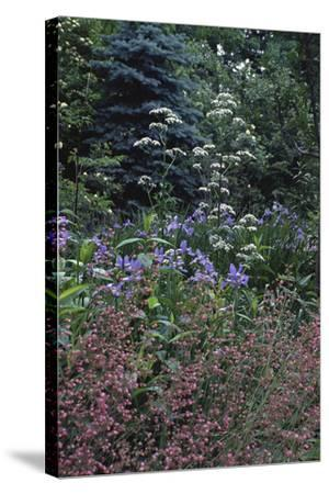 Garden View-Anna Miller-Stretched Canvas Print