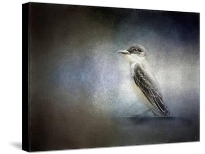 Eastern Kingbird Portrait-Jai Johnson-Stretched Canvas Print