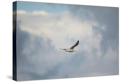Gull over Paris Landing-Jai Johnson-Stretched Canvas Print