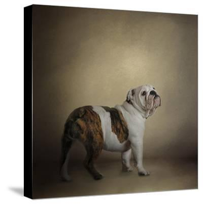 I Think I Smell a Treat Bulldog-Jai Johnson-Stretched Canvas Print