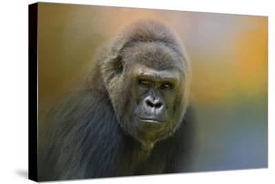 Portrait of a Gorilla-Jai Johnson-Stretched Canvas Print