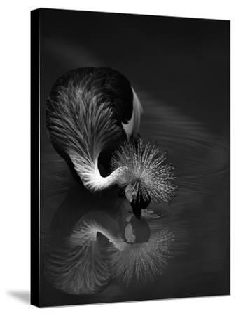 The Reflection- C.S.Tjandra-Stretched Canvas Print