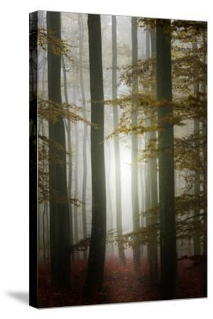 Take a walk-Philippe Sainte-Laudy-Stretched Canvas Print