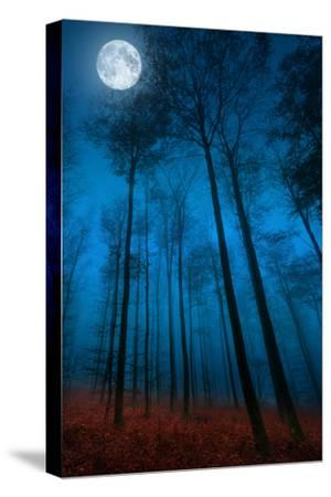 Dialogue with the moon-Philippe Sainte-Laudy-Stretched Canvas Print