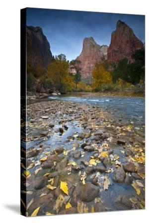 USA, Utah, Zion National Park. the Sentinel with Fallen Leaves in Virgin River-Jaynes Gallery-Stretched Canvas Print