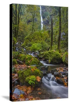Fall Color Along Starvation Creek Falls, Columbia Gorge, Oregon-Chuck Haney-Stretched Canvas Print