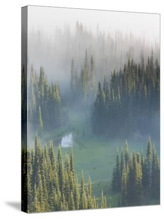 Washington, Mount Rainier National Park. Overview of Surprise Lake-Jaynes Gallery-Stretched Canvas Print
