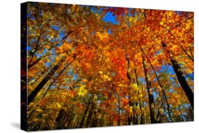 USA, West Lafayette, Indiana, Trees at the Celery Bog in Autumn-Rona Schwarz-Stretched Canvas Print