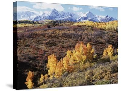 Colorado, San Juan Mountains, Autumn Colors of Aspen at Dallas Divide-Christopher Talbot Frank-Stretched Canvas Print