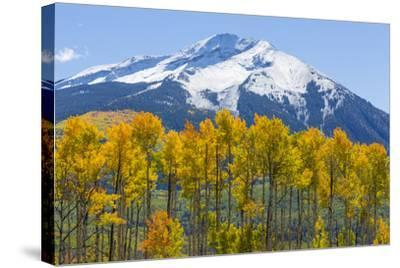 Colorado. Fall Aspens and Mountain-Jaynes Gallery-Stretched Canvas Print