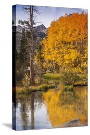Eastern Sierra, Bishop Creek, California Outlet and Fall Color-Michael Qualls-Stretched Canvas Print