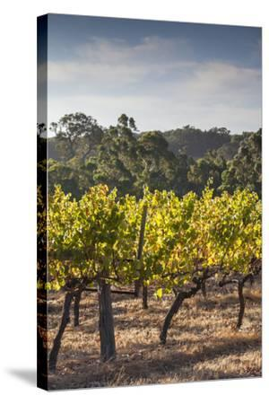 Southwest Australia, Margaret River Wine Region, Vineyard-Walter Bibikow-Stretched Canvas Print