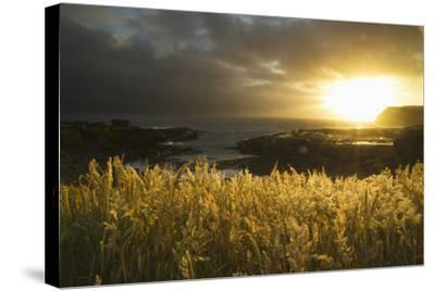 Sunlight Glowing at Sunset and Illuminating the Tall Grass at the Water's Edge-Design Pics Inc-Stretched Canvas Print