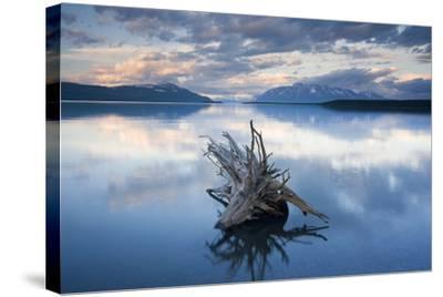 Driftwood Stump in Naknek Lake Katmai National Park Southwest Alaska Summer-Design Pics Inc-Stretched Canvas Print