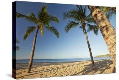 Hawaii, Lanai, Hulopoe Beach, Tall Palm Trees on a Beautiful Beach-Design Pics Inc-Stretched Canvas Print