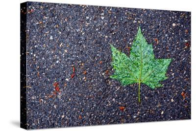 A Wet Green Leaf on the Street-Keith Ladzinski-Stretched Canvas Print