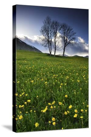 Meadow with Yellow Dandelions, Gap, France-Keith Ladzinski-Stretched Canvas Print