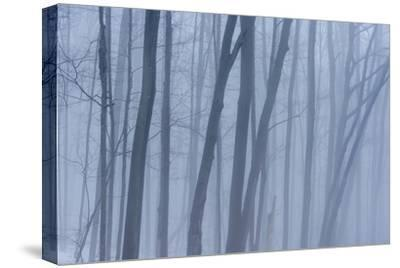 A Grove of Trees in Sleeping Bear Dunes National Lakeshore on the East Side of Lake Michigan-Michael Melford-Stretched Canvas Print