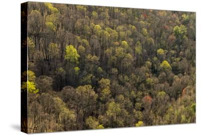 The Bald River Proposed Wilderness in Tennessee's Cherokee National Forest-Michael Melford-Stretched Canvas Print